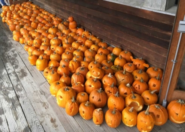 This is what 150 jack-o'-lanterns look like
